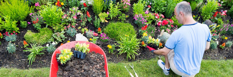 Professional gardener planting flowers